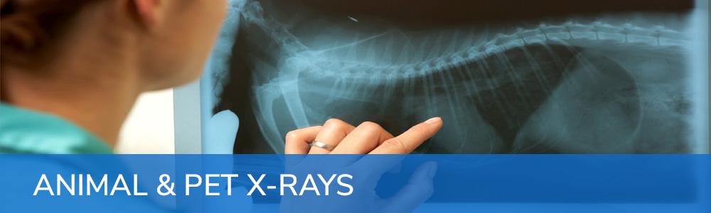 Animal & Pet X-Rays
