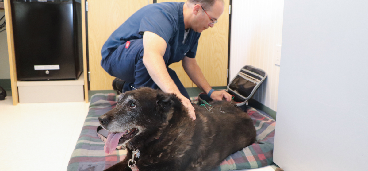 Animal & Pet Acupuncture